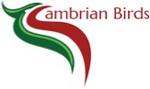 Cambrian Birds